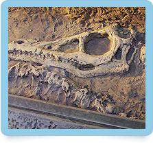 Ausgrabungscamp, Dinoforschern, ausgrabungsplatte, Ausgrabungsstätte, UR-Giganten